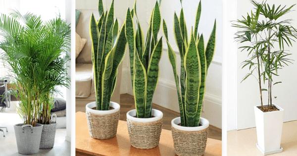 Las mejores plantas para purificar el aire en tu casa for Plantas para tener en casa segun el feng shui