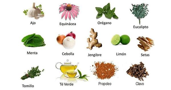 Plantas medicinales para los dolores consejos de salud for Planta decorativa con propiedades medicinales